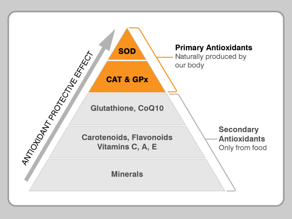 agua hidrogenada AlmaCore antioxidantes